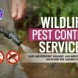 Wildlife Pest Control