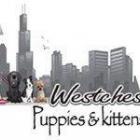 Westchester Puppies & Kittens