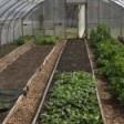 Urban Farm Concepts