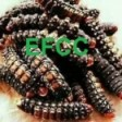 Ecological Food Cartepillars Company