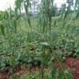 Rural Agrofestry Initiative (RAI)
