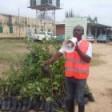 One Billion Trees for Africa